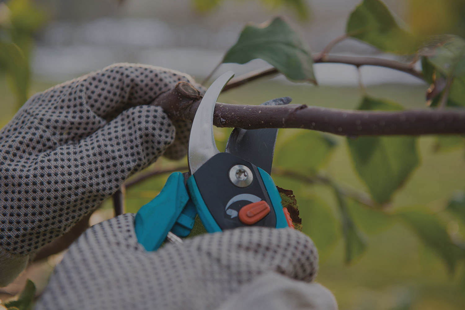 Pruning is part of our garden maintenance